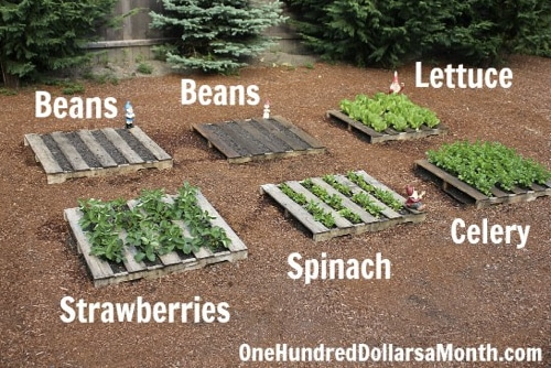 How To Start A No Fuss Vegetable Pallet Garden Homestead Survival