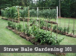 Straw Bale Gardening 101
