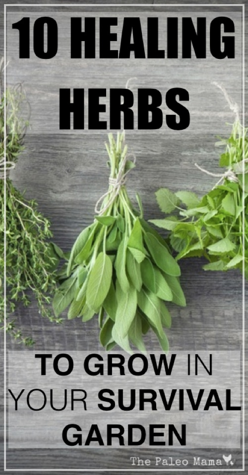 10 Natural-Healing-Herbs-To-Grow-In-Your-Survival-Garden