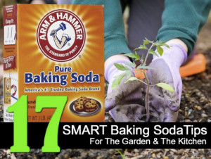17 Smart Baking Soda Tips For Garden & The Kitchen