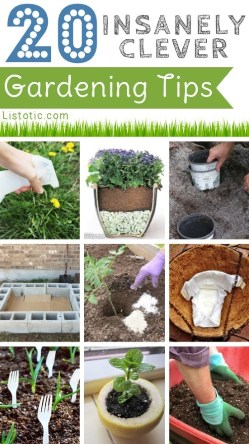 20 Insanely Clever Gardening Tips