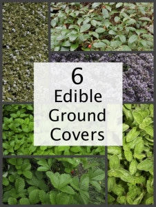 6 Edible Ground Cover Plants For Your Yard