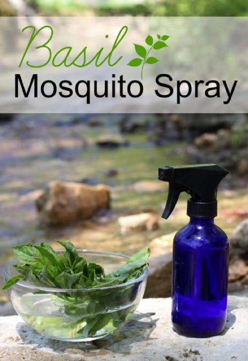 Homemade-Basil-Mosquito-Spray