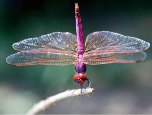 How-To-Attract-Dragonflies-And-Ladybugs