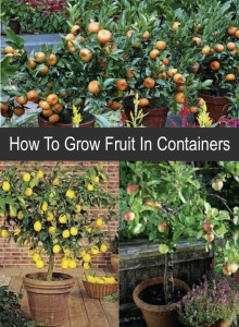How To Grow Fruit In Containers