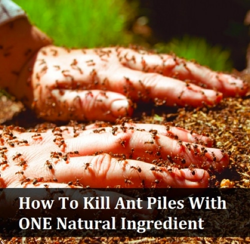 How-To-Kill-Ants-With-Only-One-Ingredient