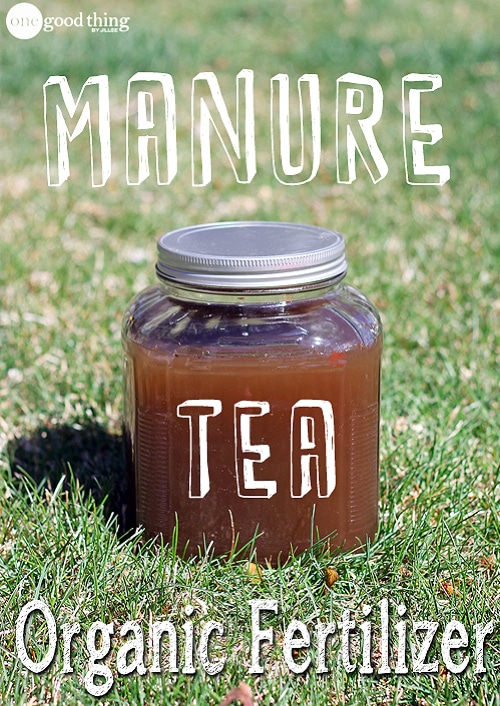 How-To-Make-Manure-Tea-Natural-Fertilizer