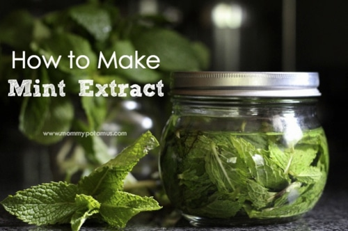 How-To-Make-Mint-Extract