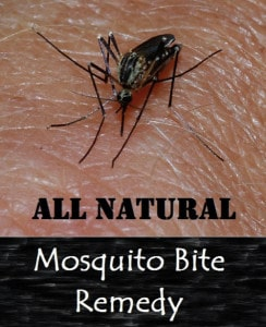Natural Mosquito Bite Remedy