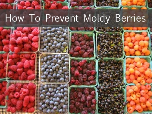 Simple-Trick-To-Prevent-Moldy-Berries