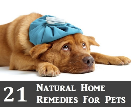 21-Natural-Home-Remedies-For-Pets