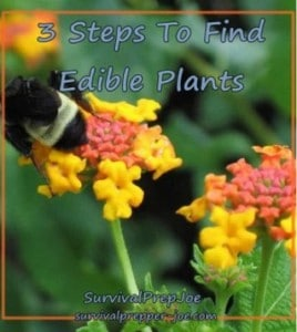 3 Steps To Find Edible Plants