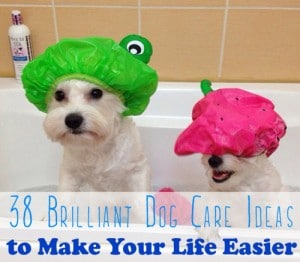 38 Unexpected Brilliant Tips For Dog Owners