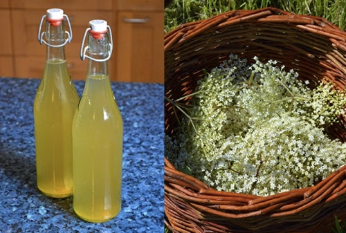 Elderflower-Cordial-Recipe