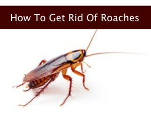 How-To-Get-Rid-Of-Cockroaches