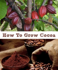 How To Grow Cocoa In A Greenhouse