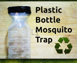 How To Make DIY Plastic Bottle Mosquito Trap