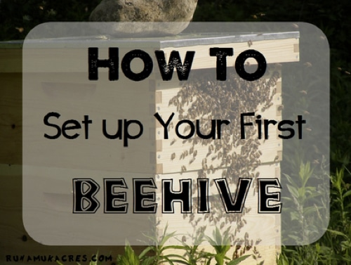 How-To-Set-Up-Your-First-Beehive
