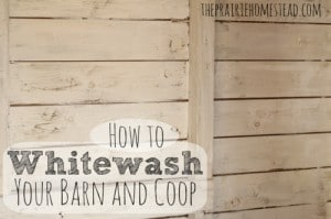 How To Whitewash Your Barn Or Chicken Coop