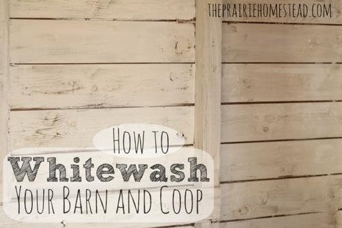 How-To-Whitewash-Your-Barn-Or-Chicken-Coop