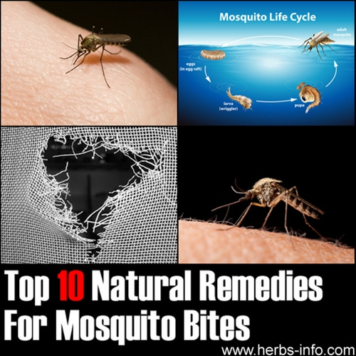 Top-10-Natural-Remedies-For-Mosquito-Bites