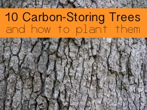 10 Carbon-Storing Trees And How To Plant Them