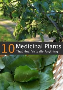 10 Medicinal Trees That Heal Virtually Everything