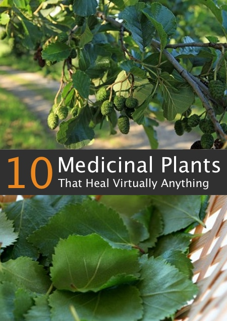 10-Medicinal-Trees-That-Heal-Virtually-Anything