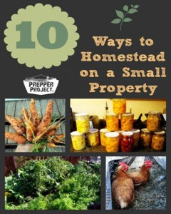 10 Ways To Homestead On A Small Property