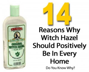 14 Reasons Why Witch Hazel Should Positively Be In Every Home