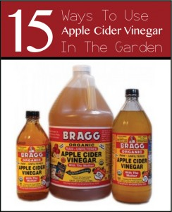 15 Ways To Use Apple Cider Vinegar In The Garden