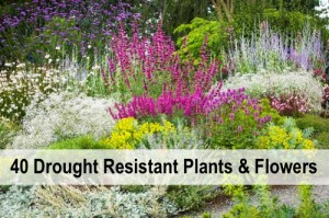 40+ Drought Resistant Plants And Flowers