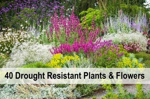 40-Drought-Resistant-Plants-And-Flowers