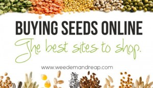 Buying Seeds Online – The Best Sites To Shop