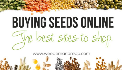 Buying-Seeds-Online-The-Best-Sites-To-Shop