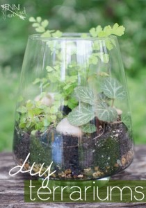 Gorgeous DIY Terrariums