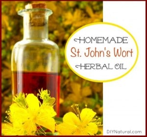 Homemade St. John's Wort Oil For Simple Burns