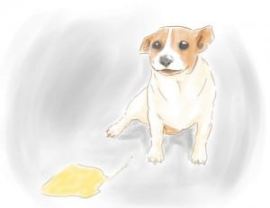 How To Get Rid Of Dog Urine Odor