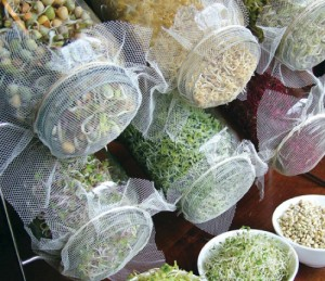 How To Grow Sprouts In Jars