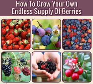 How To Grow Your Own Endless Supply Of Berries