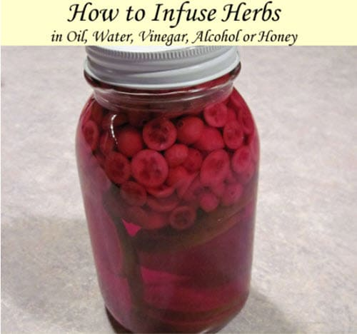 How-To-Infuse-Herbs-In-Oil-Water-Vinegar-Alcohol-Or-Honey
