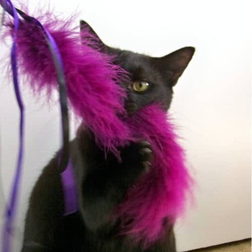 How-To-Make-A-Feather-Wand-Cat-Toy