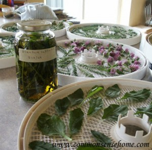 How To Make Your Own Homegrown Medicinal Herbs