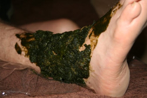 How-To-Use-Comfrey-To-Heal-Broken-Bones