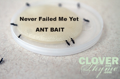 Never-Failed-Me-Yet-Ant-Bait