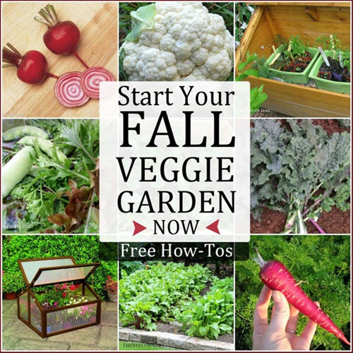 Start Your Fall Vegetable Garden Now