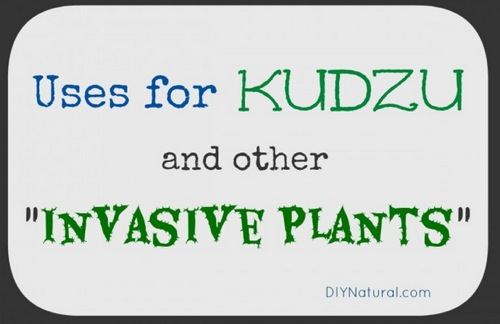 Ways-To-Use-Kudzu-And-Other-Exotic-Invasive-Plants