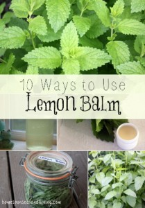 10 Ways To Use Lemon Balm