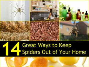 14 Great Ways To Keep Spiders Out Of Your Home