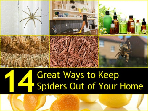 14-Ways-To-Kep-Spiders-Out-Of-Your-Home